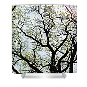 Branches Against Sky In Spring Outback Shower Curtain