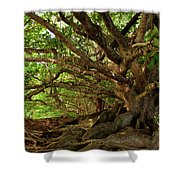 Branches And Roots Shower Curtain by James Eddy