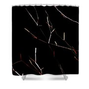 Branches In The Dark Shower Curtain