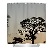 Branches In The Sunset Shower Curtain