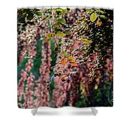 Branches Of A Tree With Colorful Leaves Shining In The Sunlight Shower Curtain