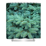 Branches Of Blue Spruce Shower Curtain