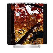 Branching Into Autumn Shower Curtain