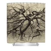 Branching Out In Autumn Antique Shower Curtain