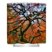 Branching Out In Autumn Shower Curtain
