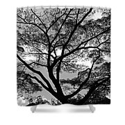 Branching Out In Bw Shower Curtain