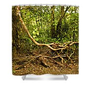 Branching Out In Costa Rica Shower Curtain by Madeline Ellis
