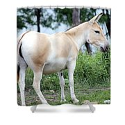 Branded Shower Curtain