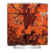 Brandywine  Maple Fall Colors 2 Shower Curtain