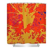 Brandywine  Maple Fall Colors 4 Shower Curtain