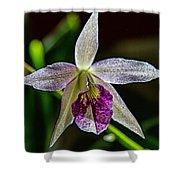 Brassocattleya Orchid Shower Curtain