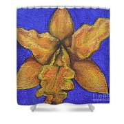 Brassolaeliocattleya Hybrid Shower Curtain