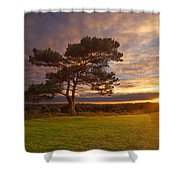 Bratley View Tree Shower Curtain