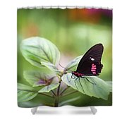 Brave Butterfly  Shower Curtain by Cindy Lark Hartman