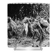 Brazil: Monkeys Shower Curtain
