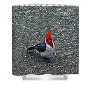 Brazillian Cardinal Shower Curtain