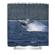 Breaching Whale Paint Shower Curtain