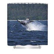 Breaching Whale. Shower Curtain