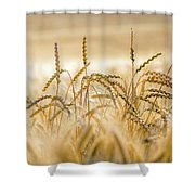 Bread Nr. 1 Shower Curtain