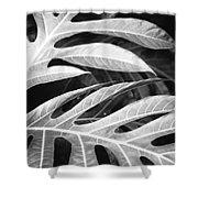 Breadfruit Tree Leaves Shower Curtain