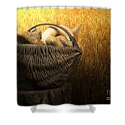 Breads And Wheat Cereal Crops Shower Curtain