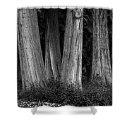 Breadth Of Trees Shower Curtain