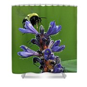 Bumble Bee Breakfast Shower Curtain
