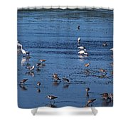 Breakfast Is For The Birds Shower Curtain