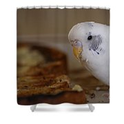 Breakfast Negotiations Shower Curtain