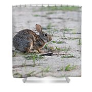 Breakfast Or Playtime Shower Curtain
