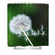 Breezy Dandelion Shower Curtain
