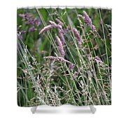 Breezy Summer 3 Shower Curtain