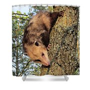 Brer Possum Shower Curtain by David Sutter