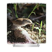 Breswick Wren On Tree Root 2 Shower Curtain