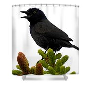 Brewer's Blackbird Shower Curtain
