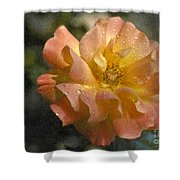 Bridal Pink Yellow Hybrid Tea Rose Genus Rosa Shower Curtain