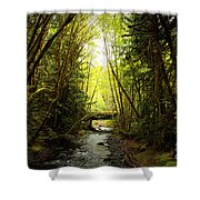 Bridge In The Rainforest Shower Curtain
