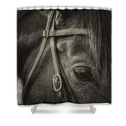 Bridled II Shower Curtain
