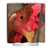 Bright And Colorful Chicken Who Are You Shower Curtain