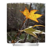 Bright And Sunlit Leaf, Arizona Shower Curtain