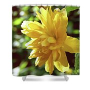 Bright As Yellow Shower Curtain