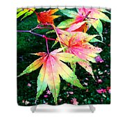 Bright Autumn Leaves Tatton Park Shower Curtain
