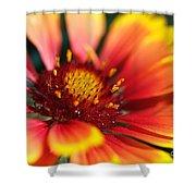 Bright Blanket Flower Shower Curtain