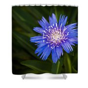 Bright Blue Aster Shower Curtain