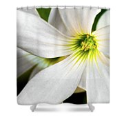 Bright Center Shower Curtain