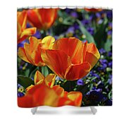Bright Colored Garden With Striped Tulips In Bloom Shower Curtain