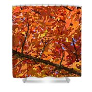 Bright Colorful Autumn Tree Leaves Art Prints Baslee Troutman Shower Curtain