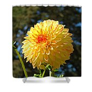 Bright Colorful Dahlia Flower Art Prints Baslee Troutman Shower Curtain