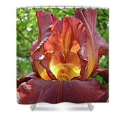 Bright Colorful Iris Flower Irises Baslee Troutman Shower Curtain