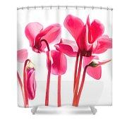 Bright Cyclamen Shower Curtain